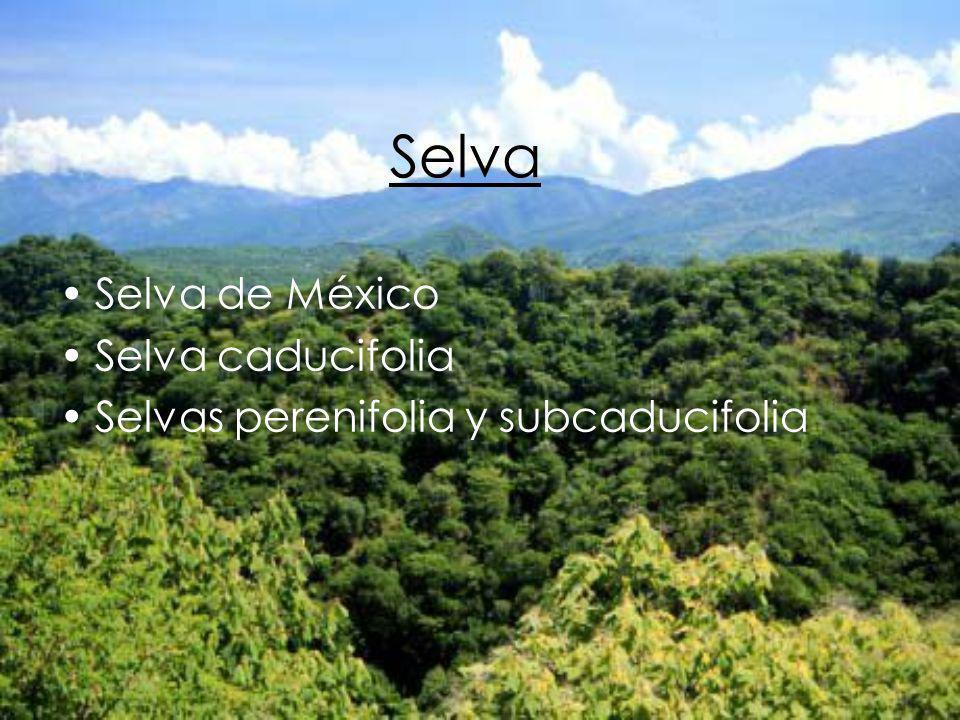 Selva Selva de México Selva caducifolia