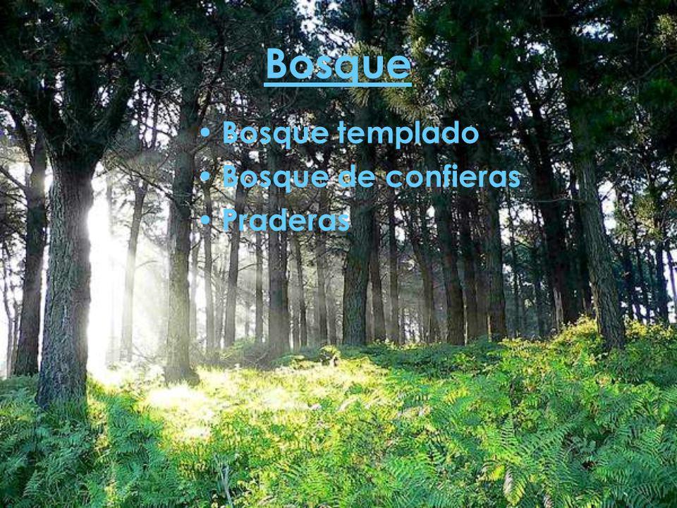 Bosque Bosque templado Bosque de confieras Praderas