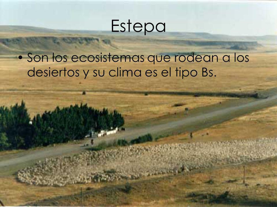 Estepa Son los ecosistemas que rodean a los desiertos y su clima es el tipo Bs.