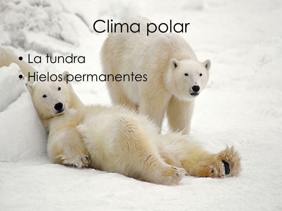 Clima polar La tundra Hielos permanentes