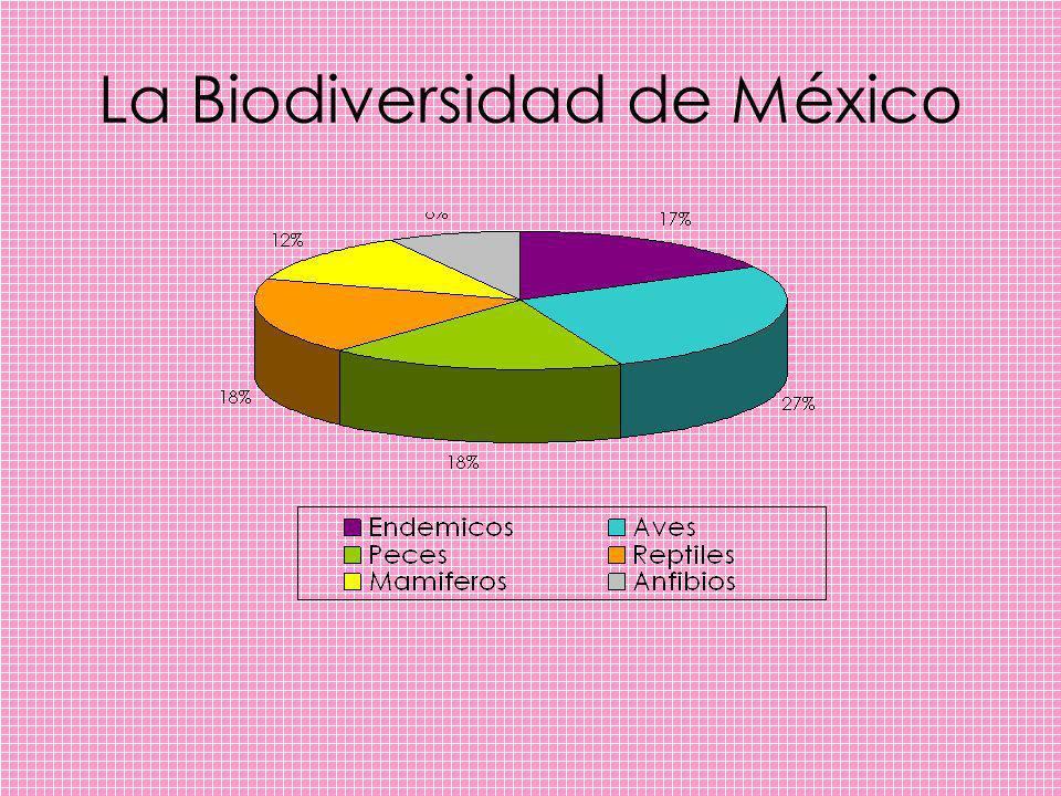 La Biodiversidad de México