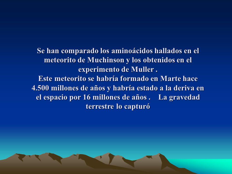 Se han comparado los aminoácidos hallados en el meteorito de Muchinson y los obtenidos en el experimento de Muller .
