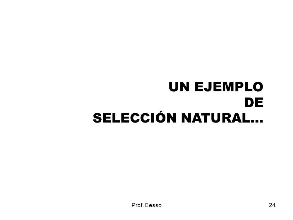 UN EJEMPLO DE SELECCIÓN NATURAL… Prof. Besso