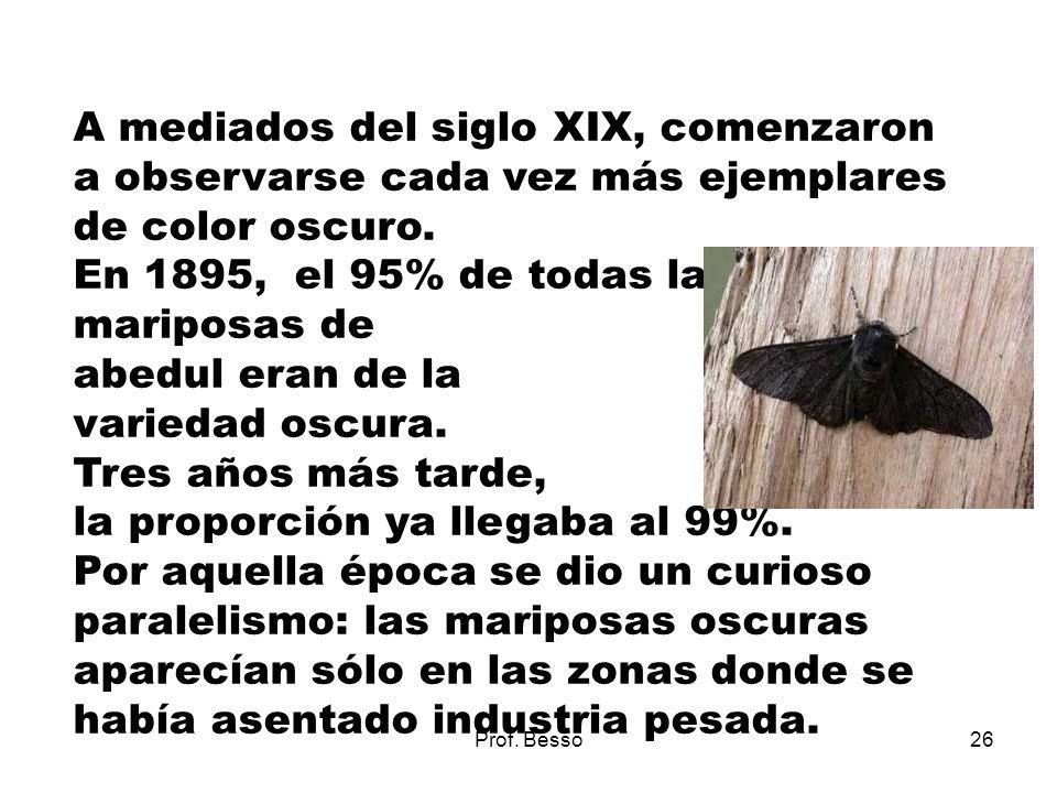 En 1895, el 95% de todas las mariposas de abedul eran de la
