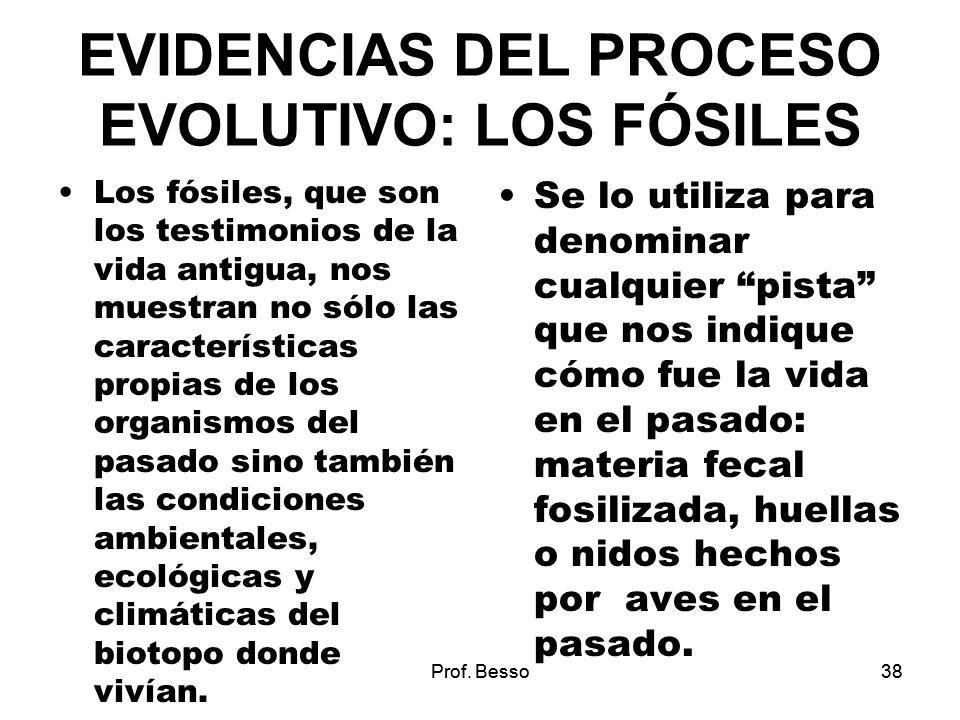 EVIDENCIAS DEL PROCESO EVOLUTIVO: LOS FÓSILES