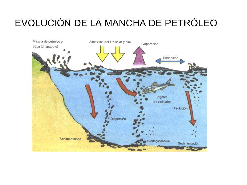 EVOLUCIÓN DE LA MANCHA DE PETRÓLEO