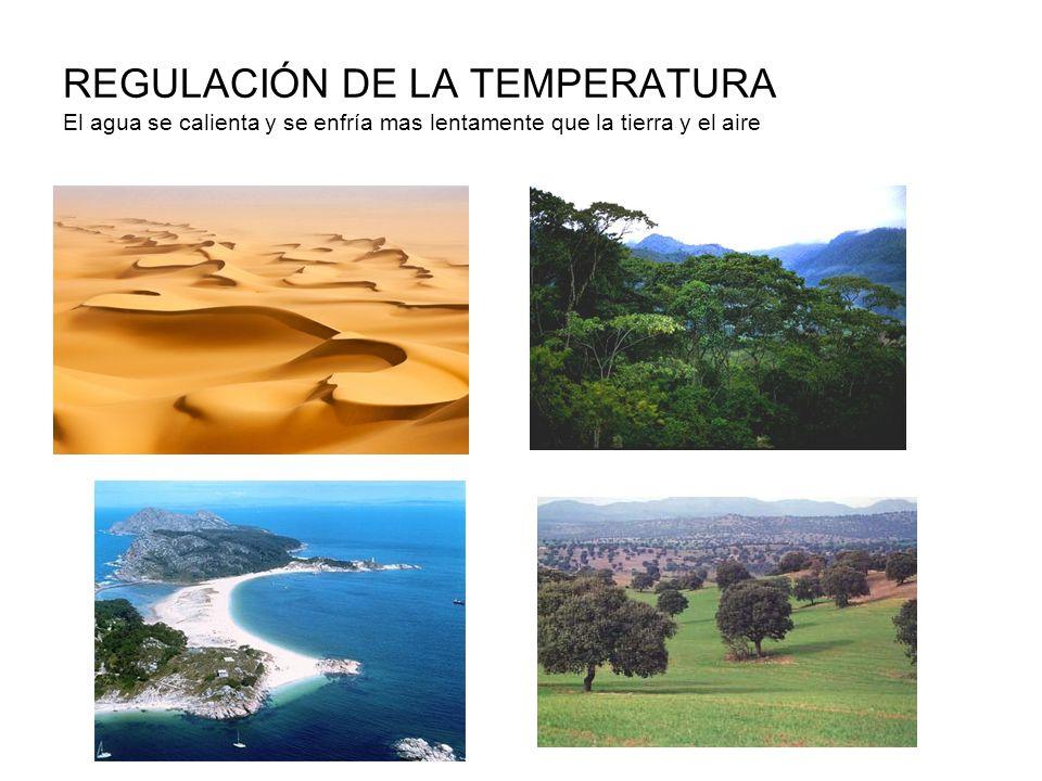 REGULACIÓN DE LA TEMPERATURA El agua se calienta y se enfría mas lentamente que la tierra y el aire