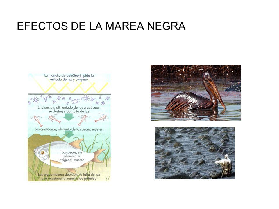 EFECTOS DE LA MAREA NEGRA