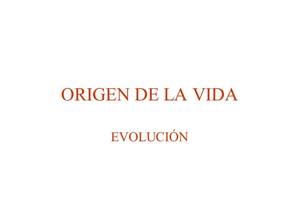 ORIGEN DE LA VIDA EVOLUCIÓN