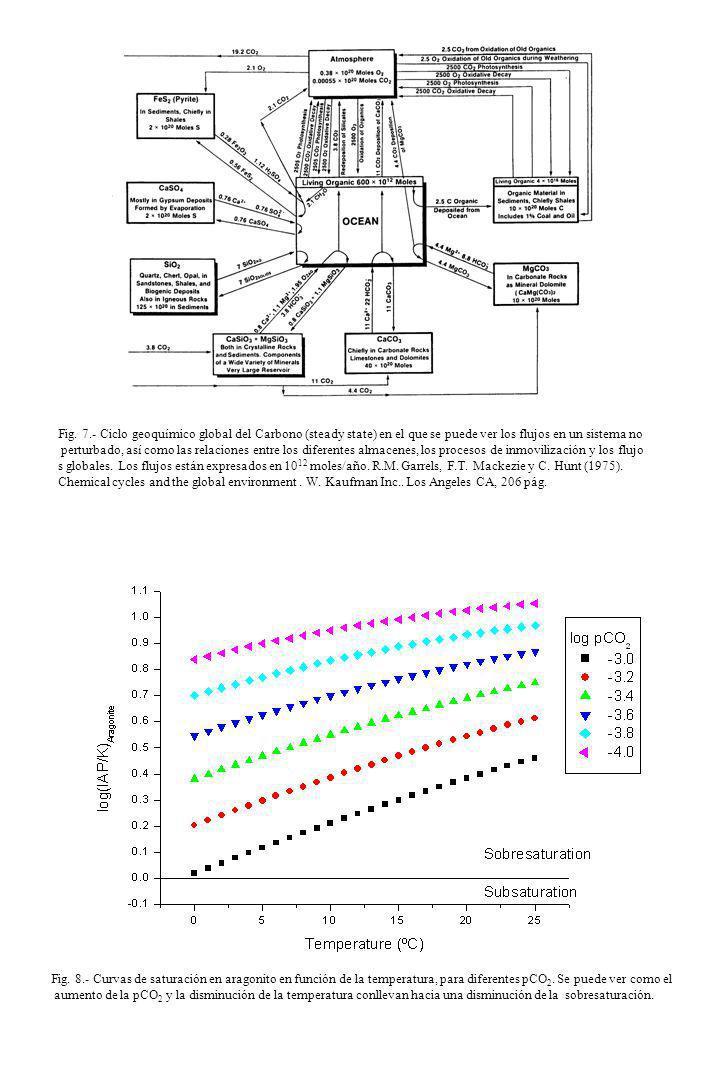 Fig. 7.- Ciclo geoquímico global del Carbono (steady state) en el que se puede ver los flujos en un sistema no