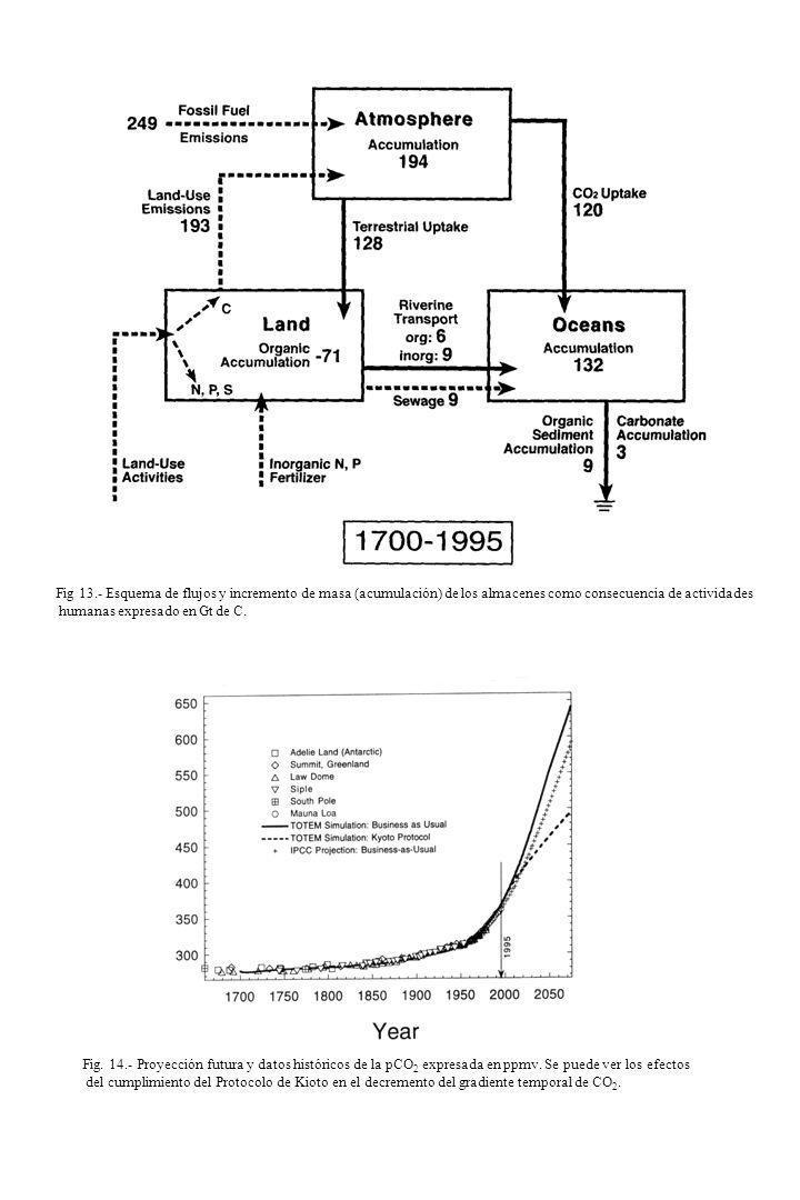 Fig 13.- Esquema de flujos y incremento de masa (acumulación) de los almacenes como consecuencia de actividades