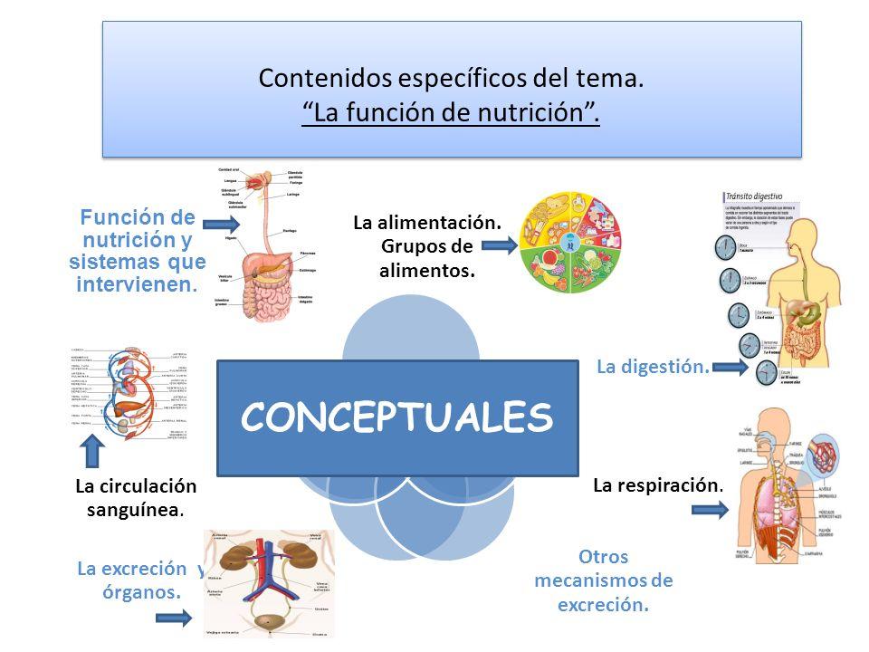 Contenidos específicos del tema. La función de nutrición .