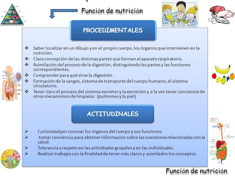 Función de nutrición Función de nutrición PROCEDIMENTALES