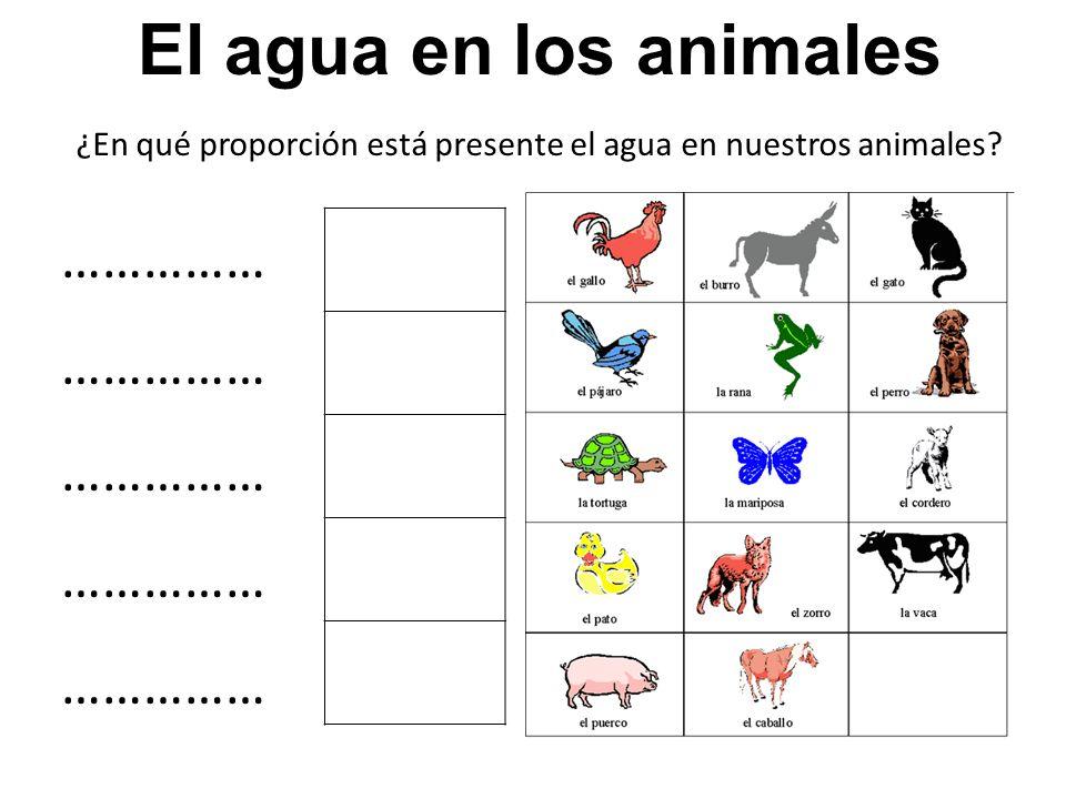 ¿En qué proporción está presente el agua en nuestros animales