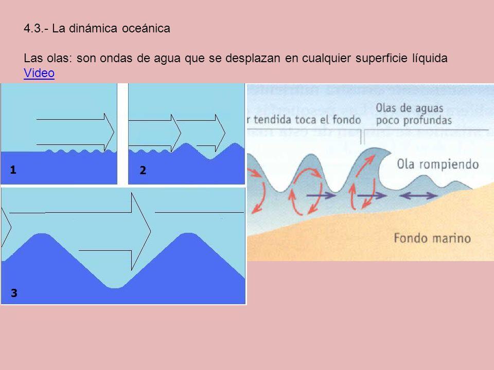 4.3.- La dinámica oceánica Las olas: son ondas de agua que se desplazan en cualquier superficie líquida.