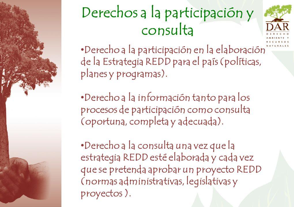 Derechos a la participación y consulta