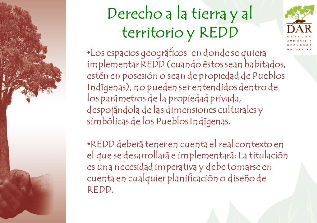 Derecho a la tierra y al territorio y REDD