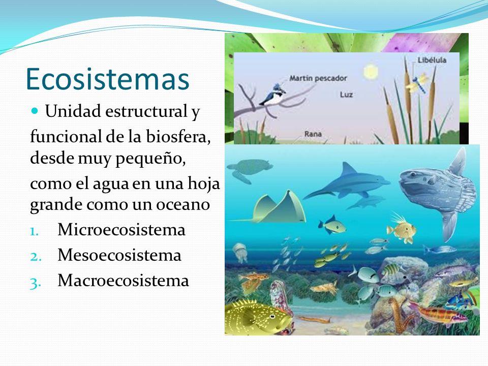 Ecosistemas Unidad estructural y