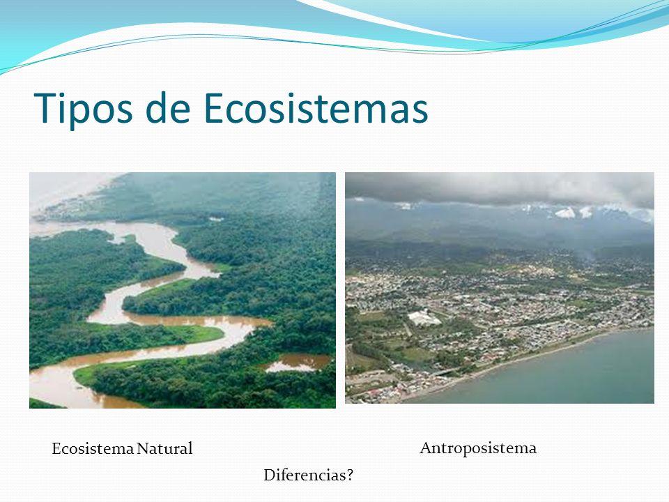 Tipos de Ecosistemas Ecosistema Natural Antroposistema Diferencias
