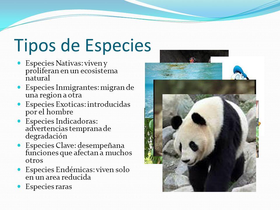 Tipos de Especies Especies Nativas: viven y proliferan en un ecosistema natural. Especies Inmigrantes: migran de una region a otra.