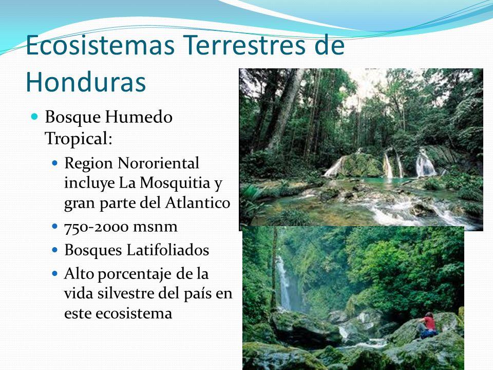 Ecosistemas Terrestres de Honduras