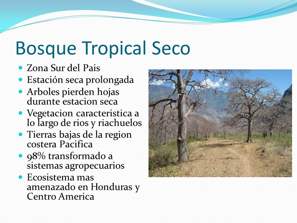 Bosque Tropical Seco Zona Sur del Pais Estación seca prolongada
