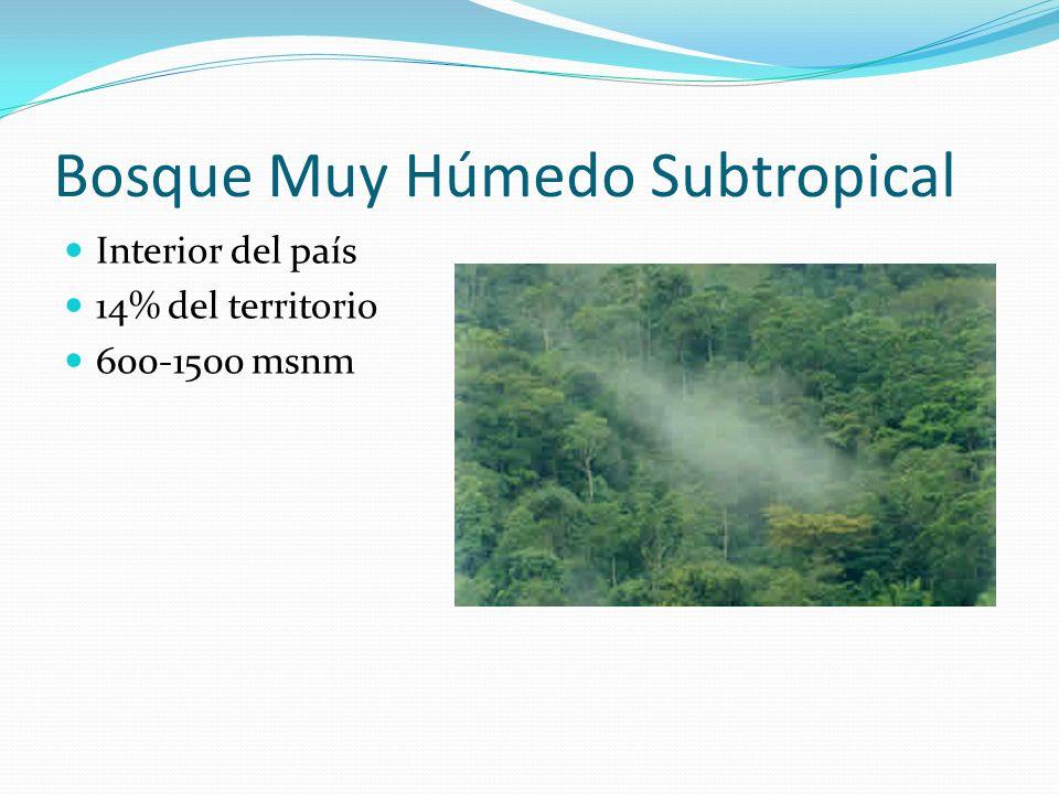 Bosque Muy Húmedo Subtropical