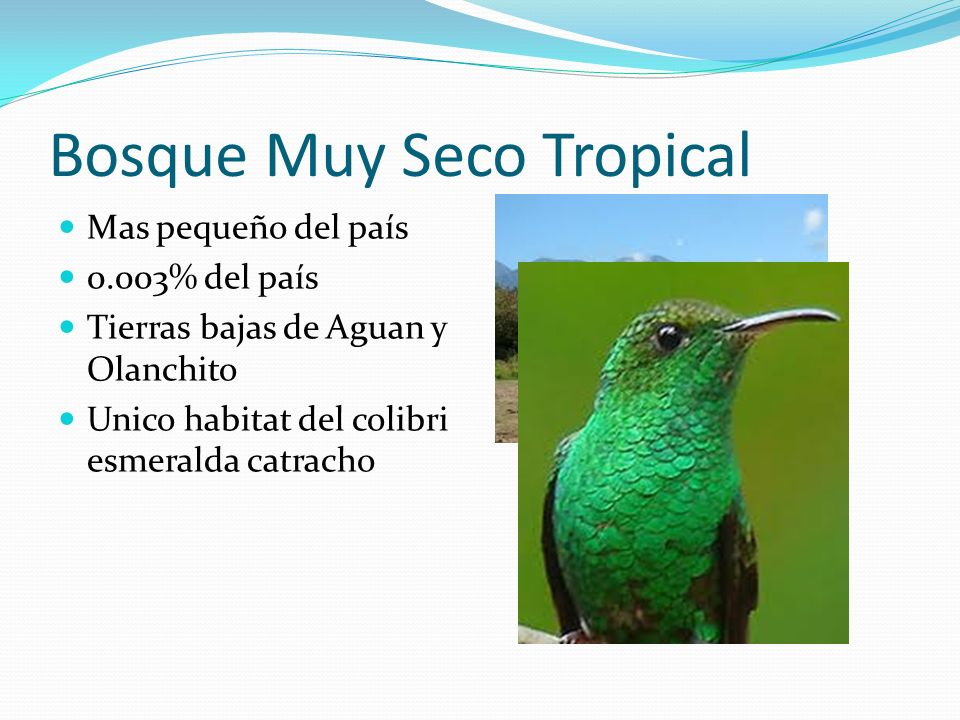 Bosque Muy Seco Tropical