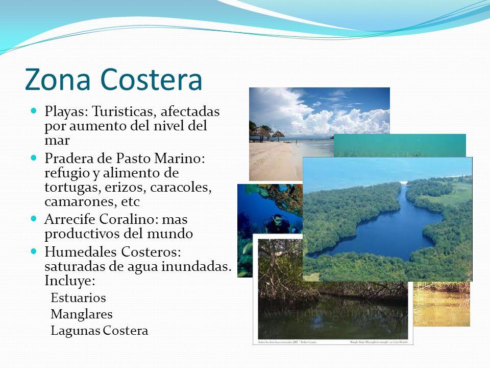 Zona Costera Playas: Turisticas, afectadas por aumento del nivel del mar.