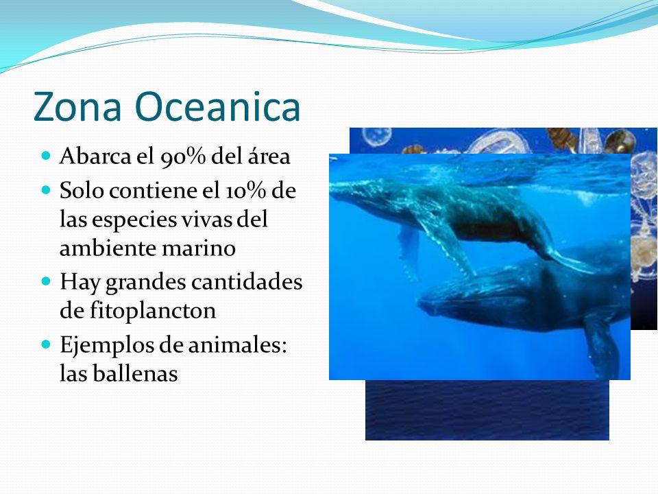 Zona Oceanica Abarca el 90% del área