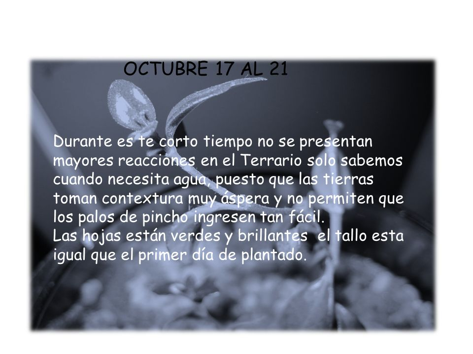 OCTUBRE 17 AL 21