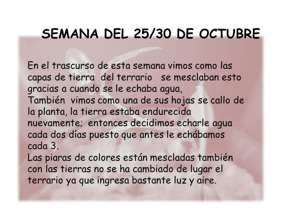 SEMANA DEL 25/30 DE OCTUBRE