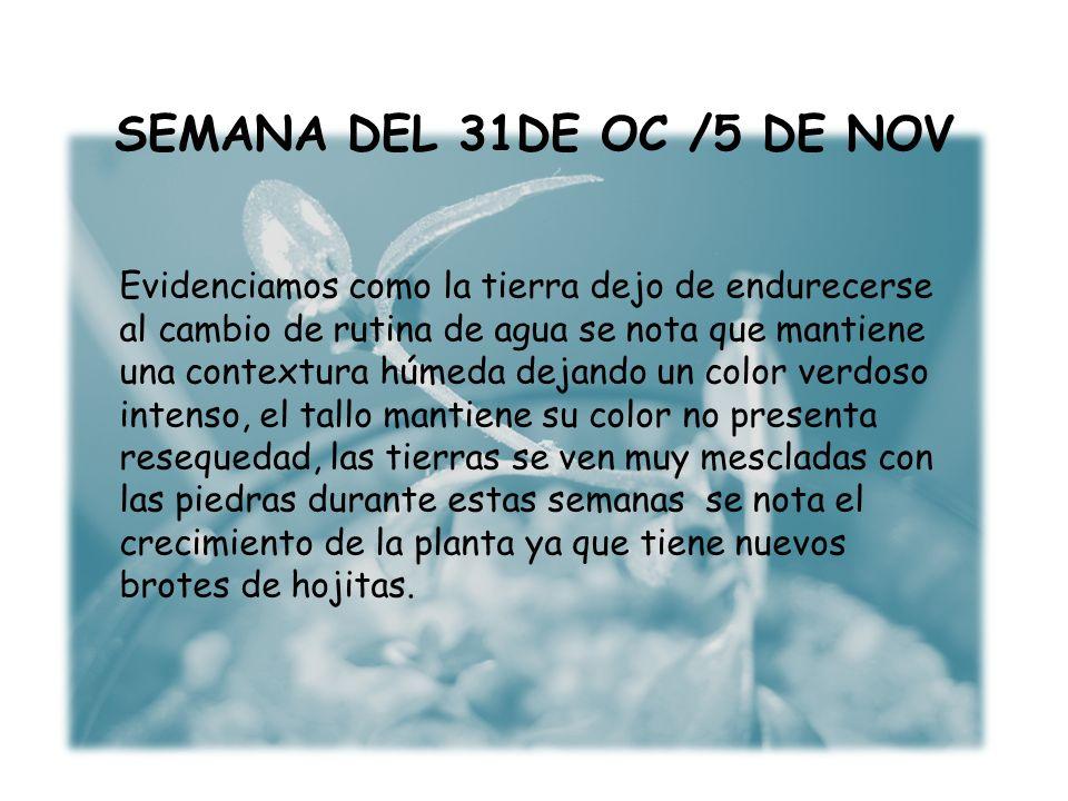 SEMANA DEL 31DE OC /5 DE NOV