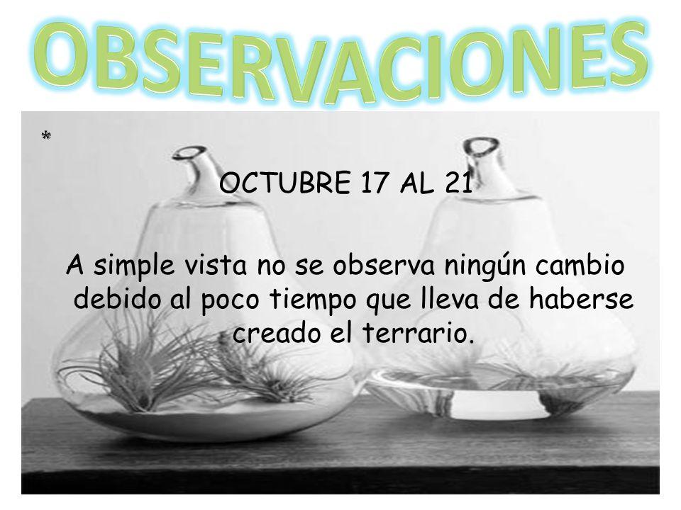 OBSERVACIONES * OCTUBRE 17 AL 21