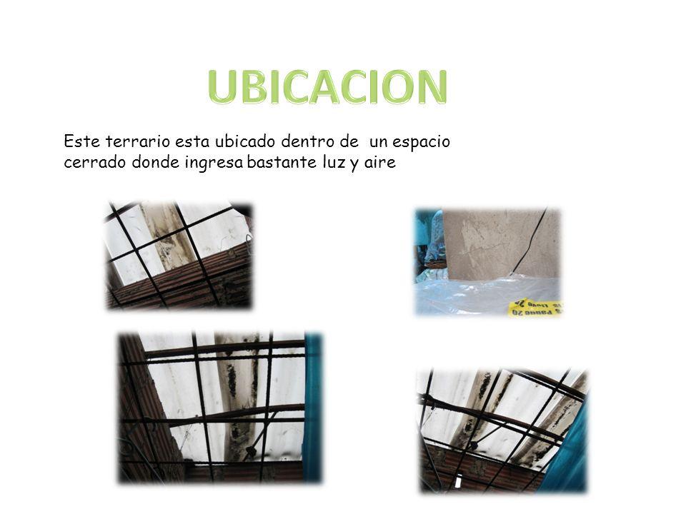 UBICACION Este terrario esta ubicado dentro de un espacio cerrado donde ingresa bastante luz y aire.