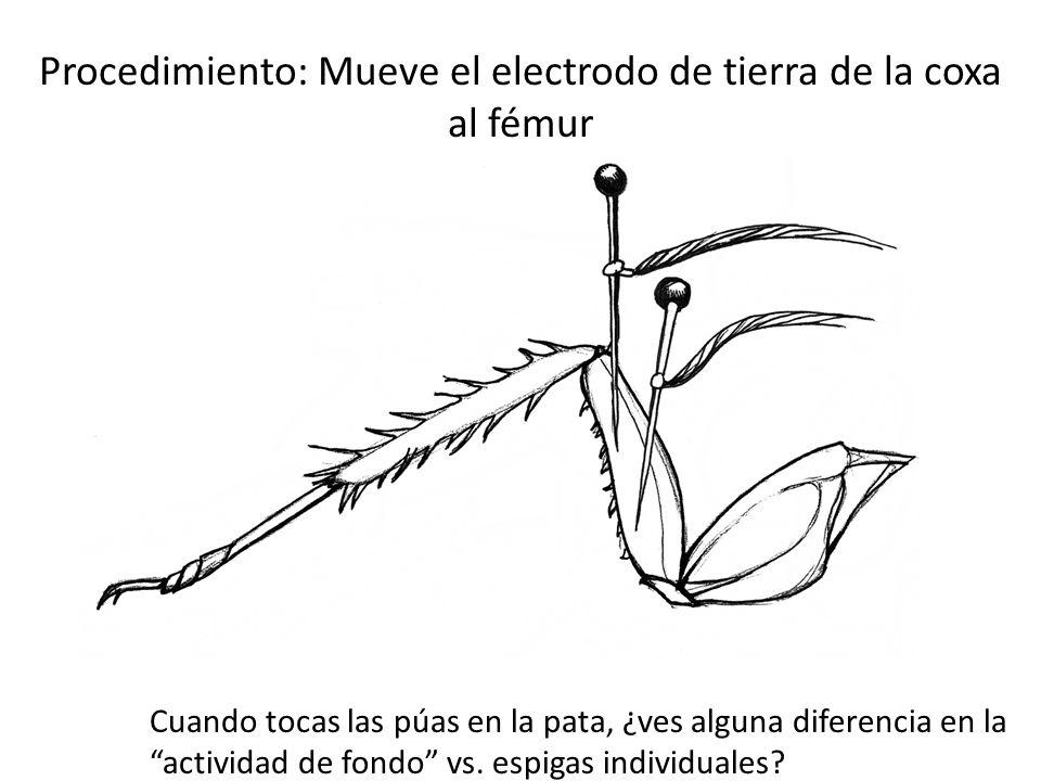 Procedimiento: Mueve el electrodo de tierra de la coxa al fémur