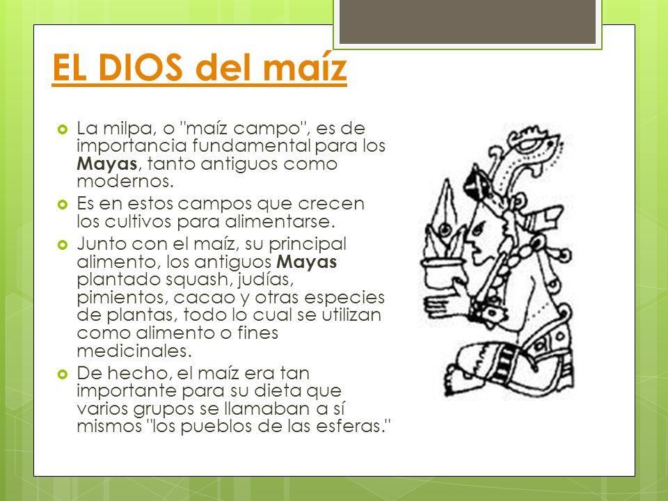 EL DIOS del maíz La milpa, o maíz campo , es de importancia fundamental para los Mayas, tanto antiguos como modernos.