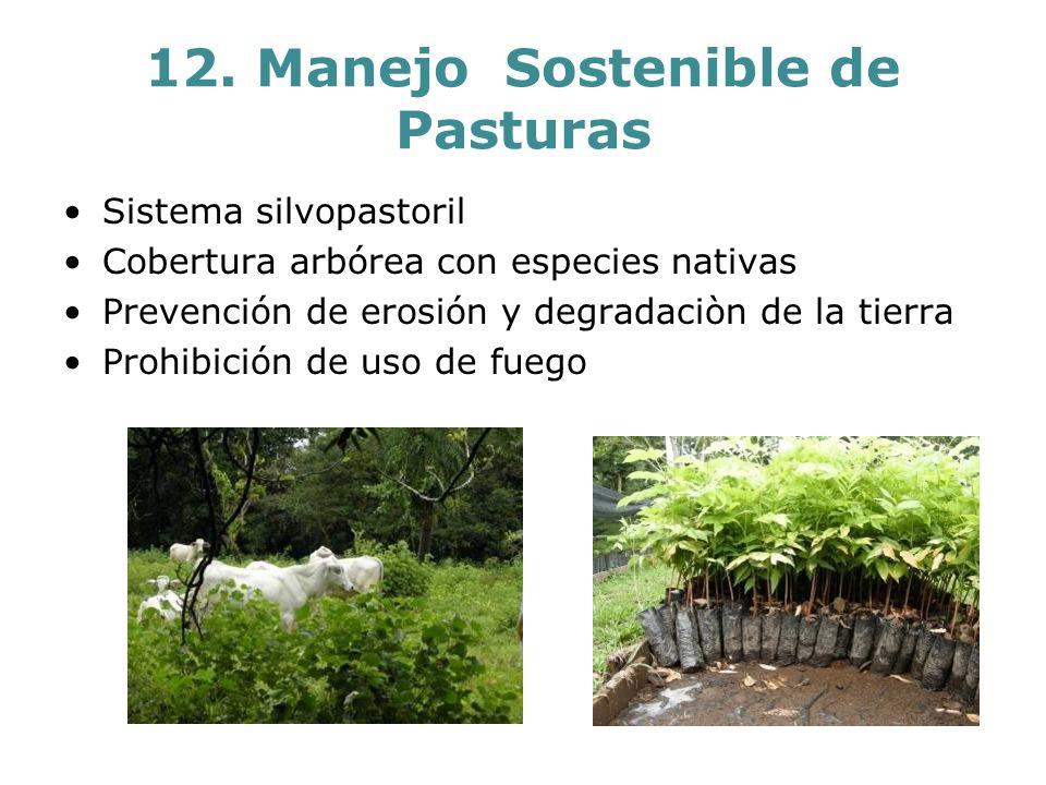 12. Manejo Sostenible de Pasturas