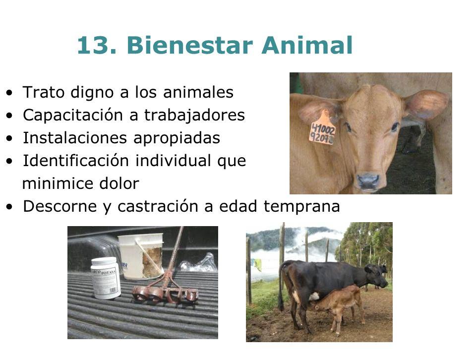 13. Bienestar Animal Trato digno a los animales