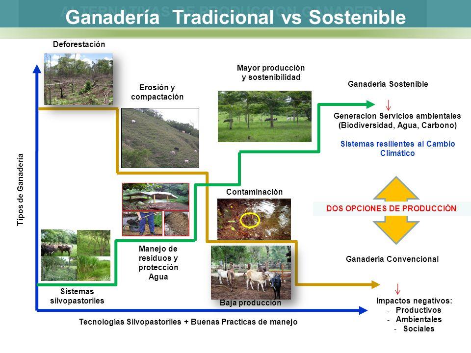 Ganadería Tradicional vs Sostenible