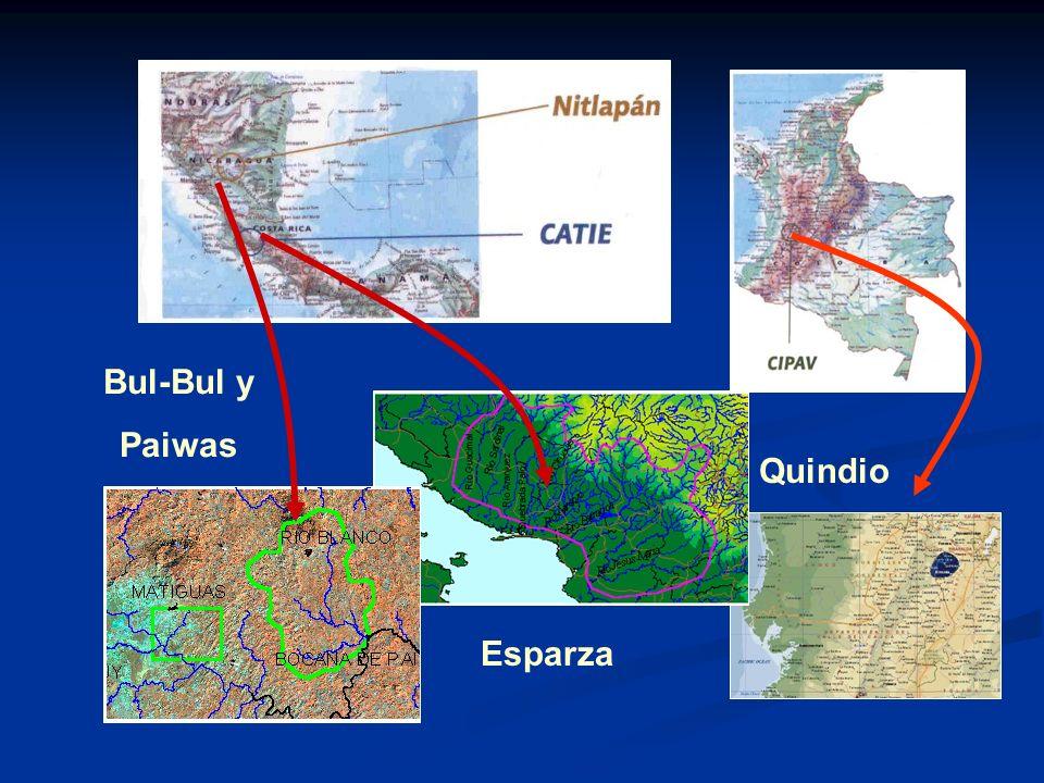 Bul-Bul y Paiwas Quindio Esparza