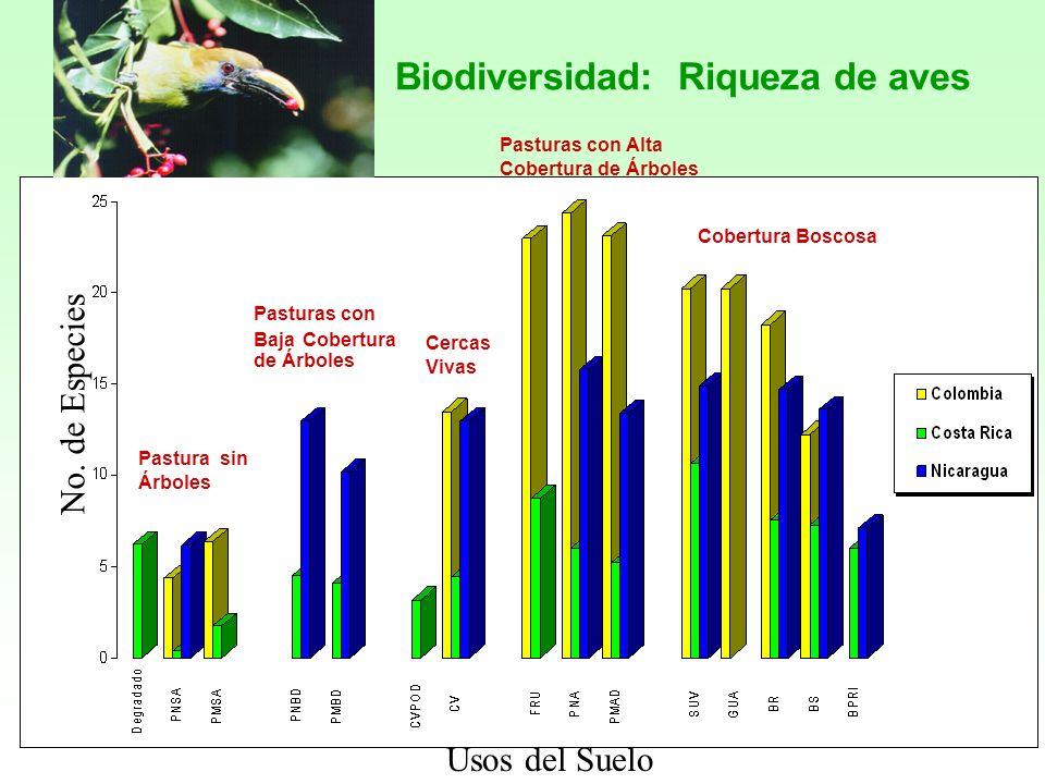 Biodiversidad: Riqueza de aves