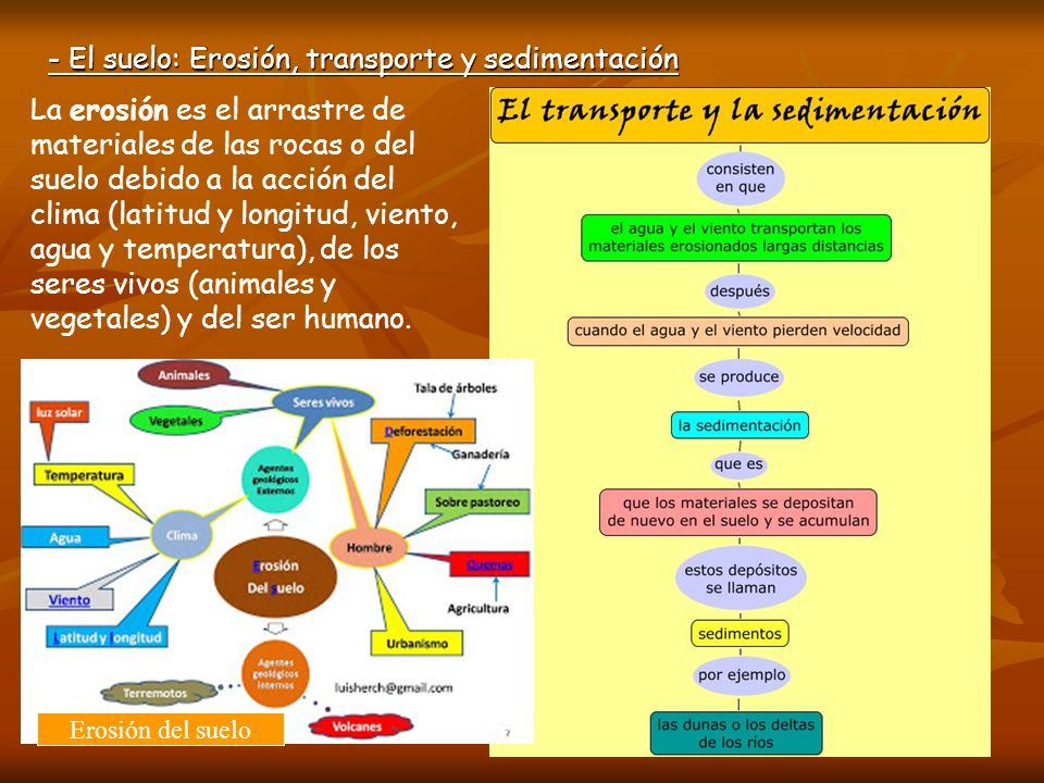- El suelo: Erosión, transporte y sedimentación