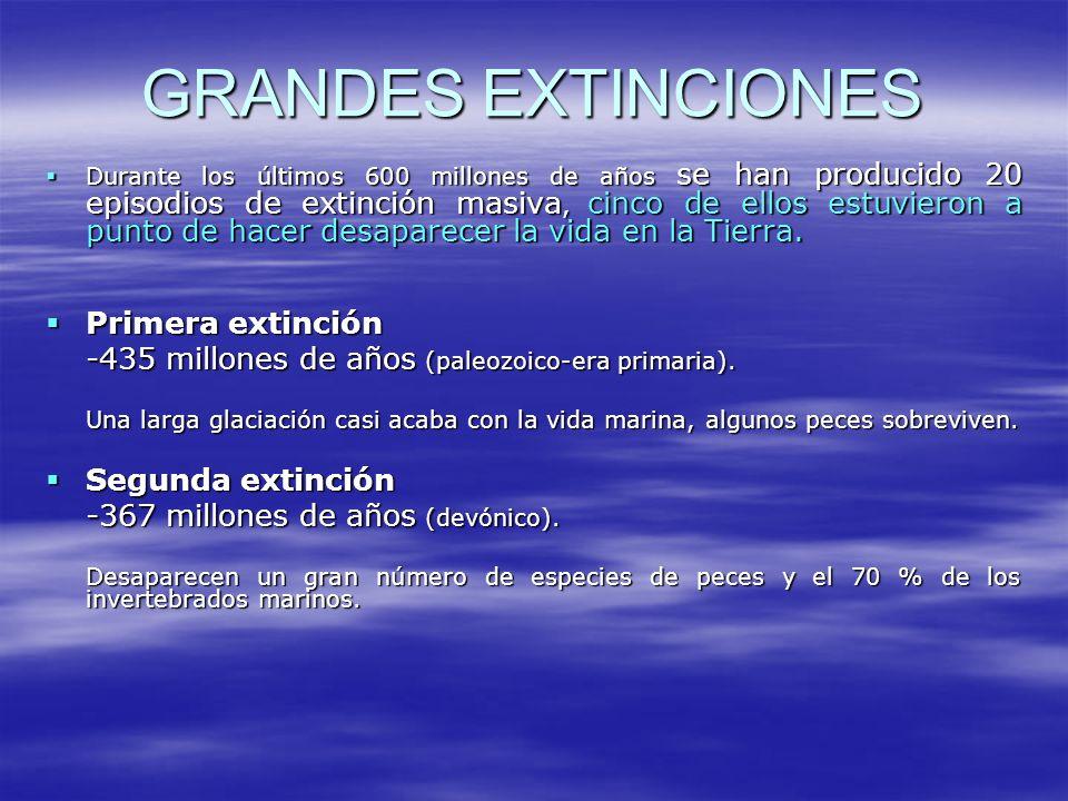 GRANDES EXTINCIONES Primera extinción Segunda extinción
