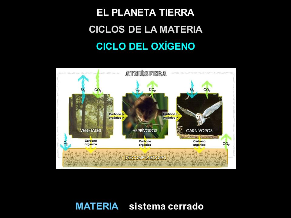 CICLOS DE LA MATERIA CICLO DEL OXÍGENO MATERIA sistema cerrado