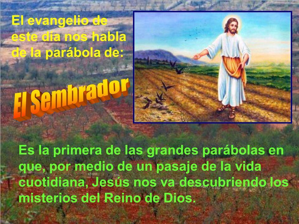 El Sembrador El evangelio de este día nos habla de la parábola de: