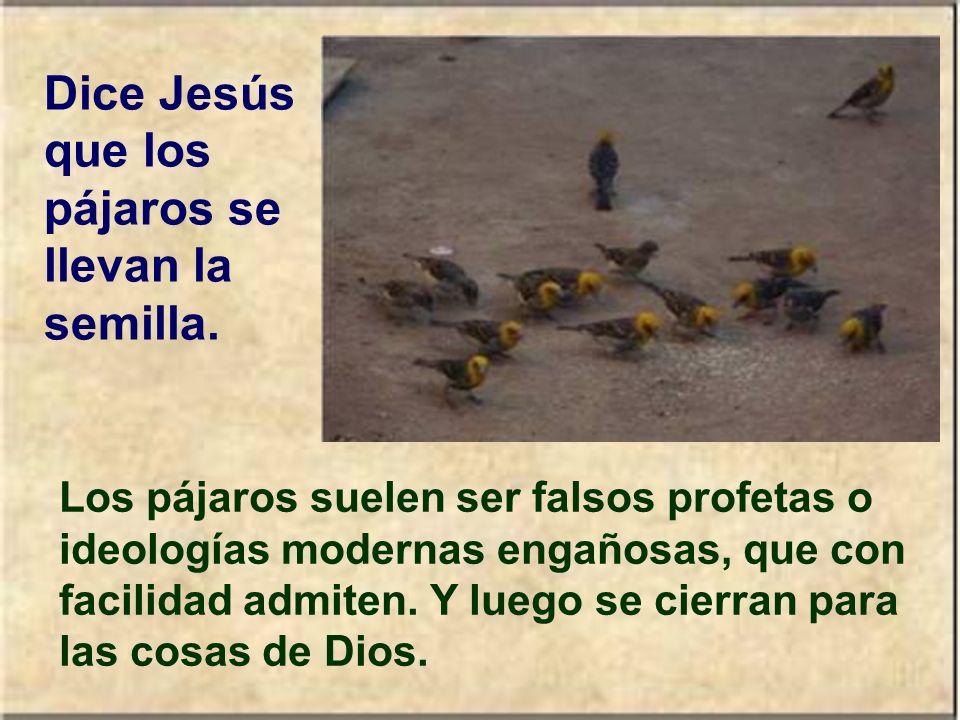 Dice Jesús que los pájaros se llevan la semilla.