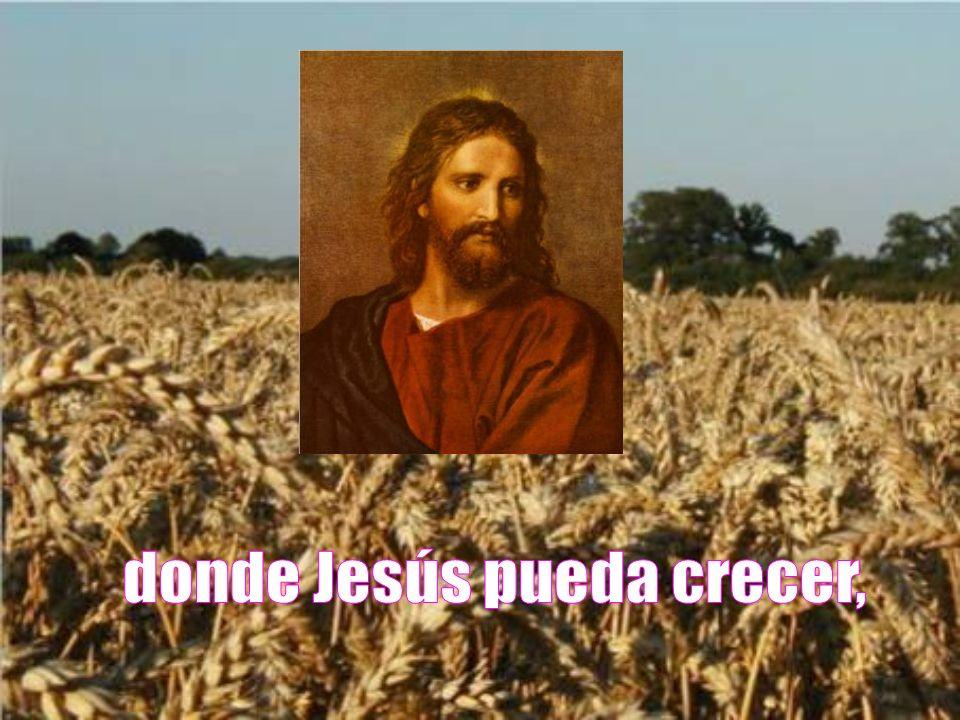 donde Jesús pueda crecer,