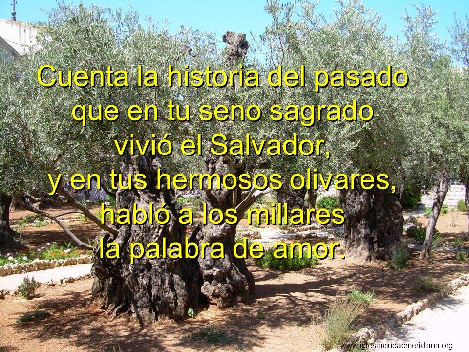 Cuenta la historia del pasado que en tu seno sagrado vivió el Salvador, y en tus hermosos olivares, habló a los millares la palabra de amor.