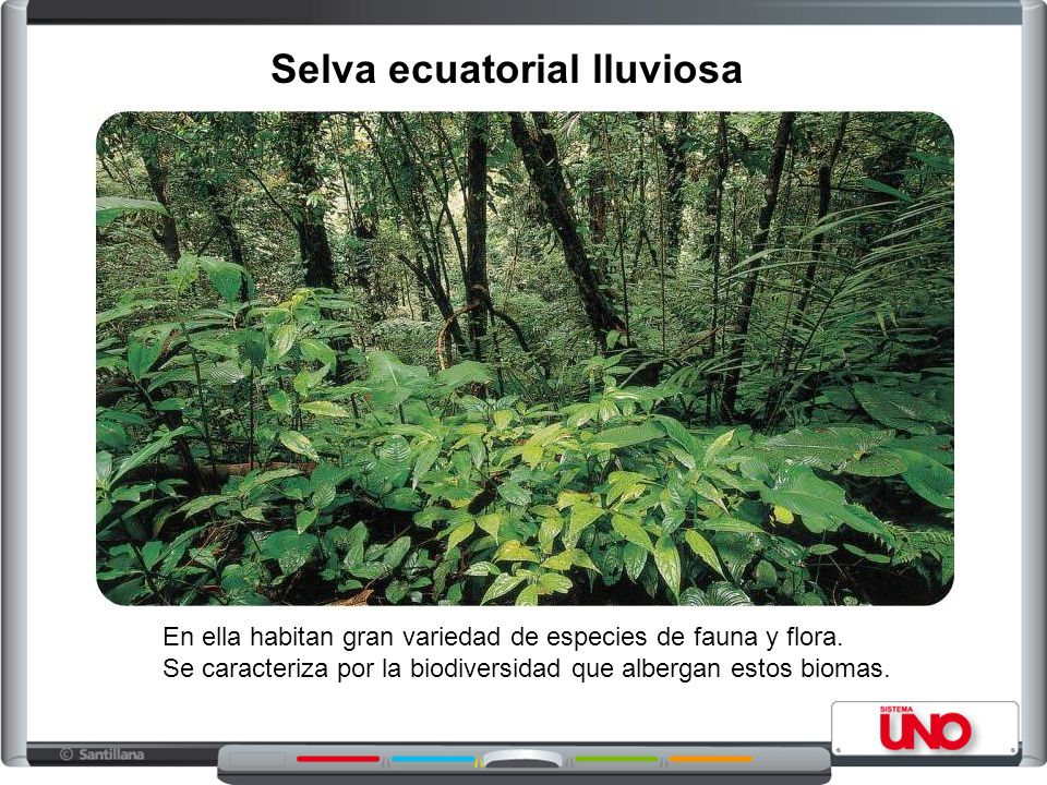 Selva ecuatorial lluviosa